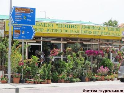 Poppies Flower Shop Erimi