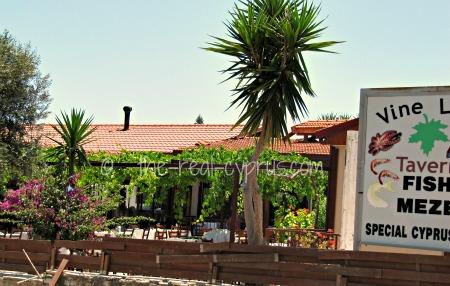 Vine Leaf Taverna Pissouri